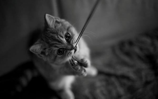 猫讨厌什么味道